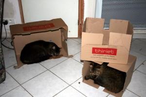 Thiriet-plait-aux-chats-1