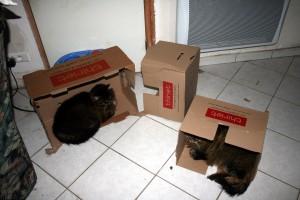 Thiriet-plait-aux-chats-2