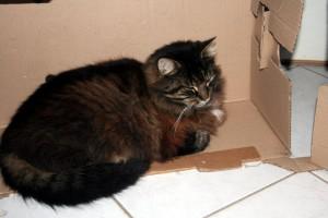 Thiriet-plait-aux-chats-4