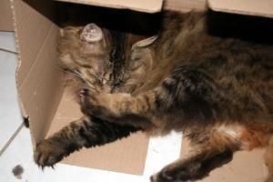 Thiriet-plait-aux-chats-5