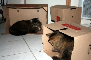 Thiriet-plait-aux-chats-6