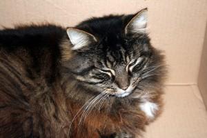 Thiriet-plait-aux-chats-7