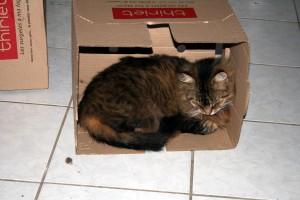 Thiriet-plait-aux-chats-8